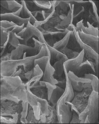 Flake Graphite Structure